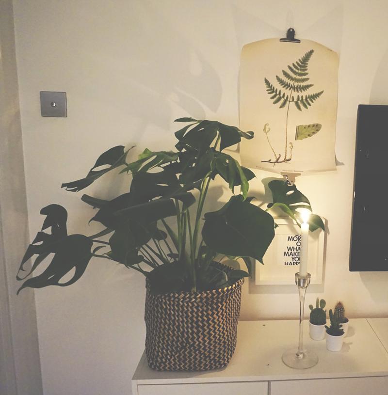 gröna-växter