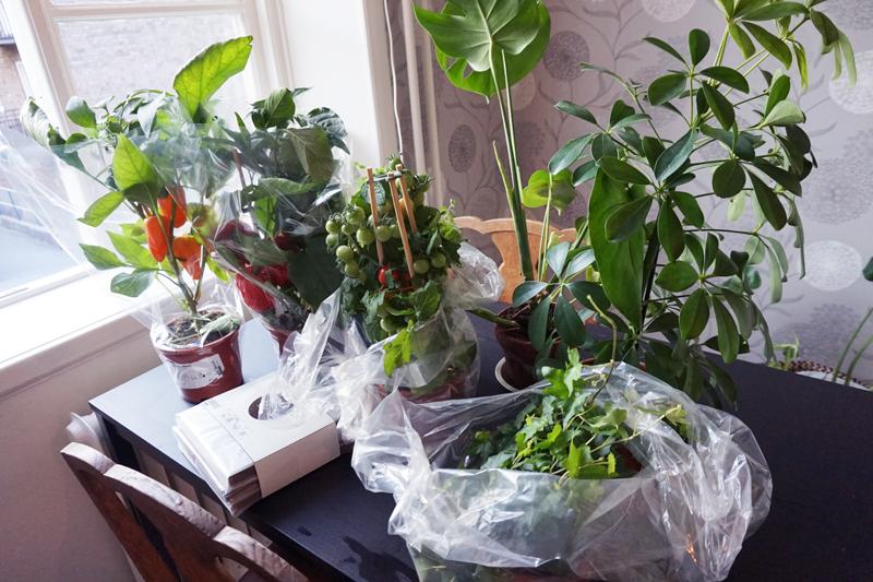 plantering_1