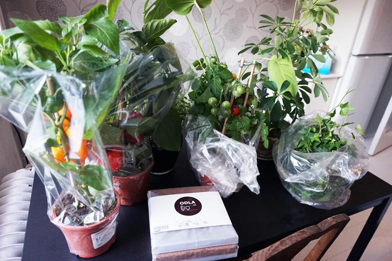 plantering_3