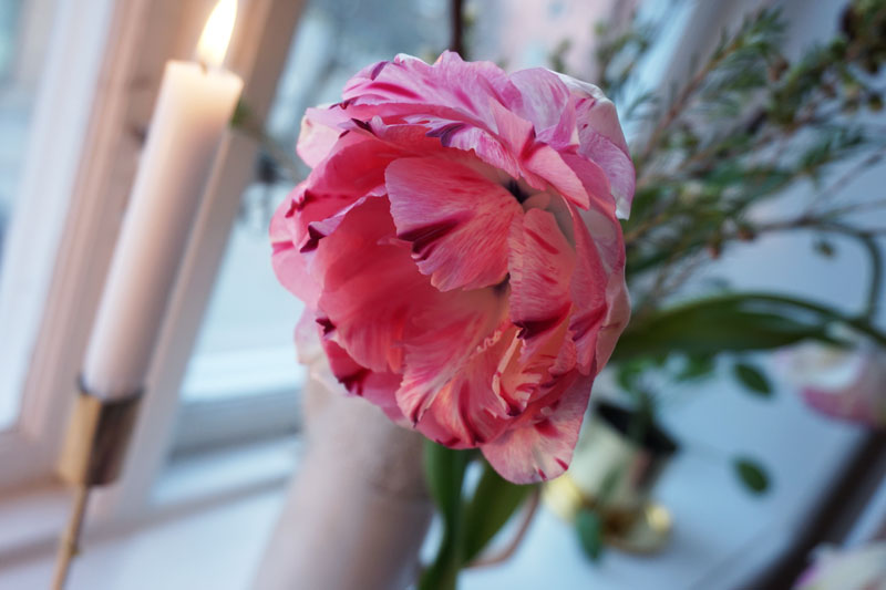 blommor_7